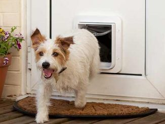 Dog Flaps in Double Glazing