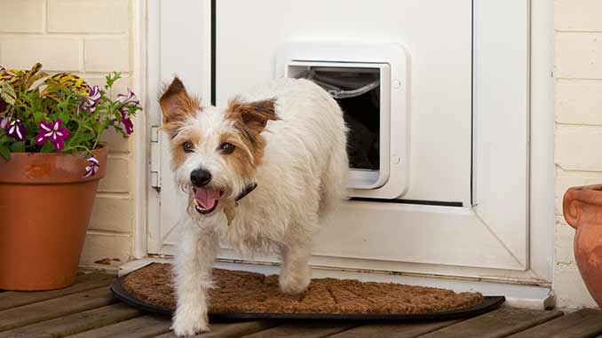 Fitting Cat And Dog Flaps In Double Glazing Doors Windows